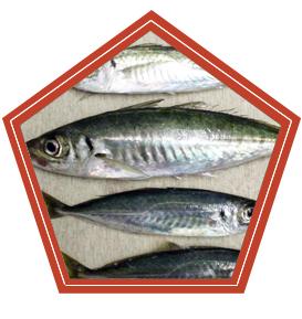 Севастопольский форум рыбаков